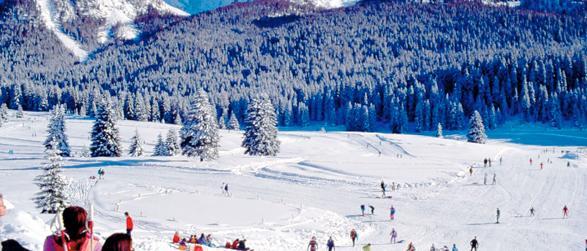 Bayerischer Wald Winter Ski