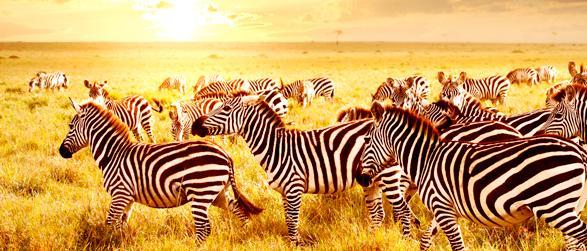 Kenia Fernreise