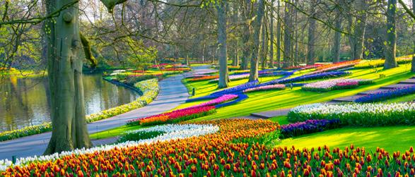 Niederlande Tulpen